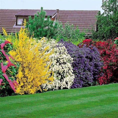 5 arbustos coloridos para realzar nuestro jardín