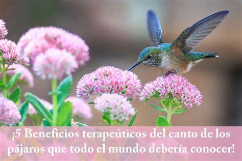 5 Beneficios terapeúticos del canto de los pájaros que ...