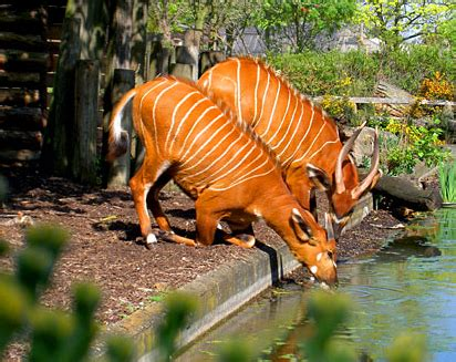 5 Best Zoos in the UK | One Step 4Ward