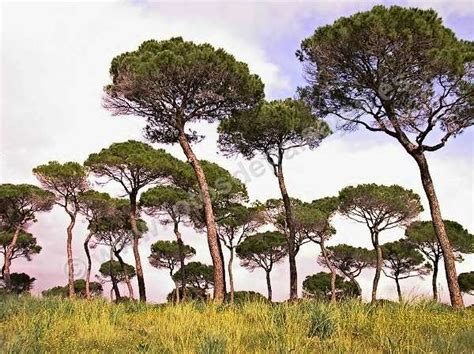 5ºC Quiere Aprender: Clima y Vegetación de Andalucía.