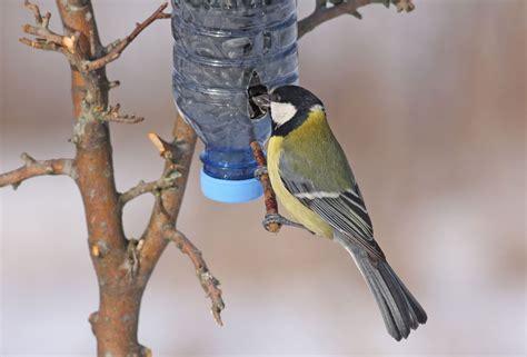 5 comederos para ayudar a los pájaros a pasar el invierno ...