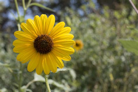 5 Common Utah Wildflowers | Natural History Museum of Utah