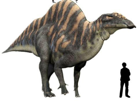 5 dinosaurios de lo más extraños   Tendenzias.com