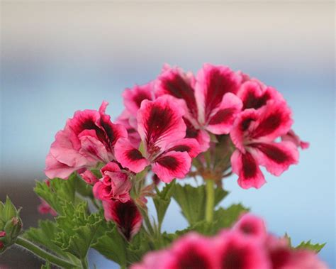 5 flores que mejor lucirán en tu jardín esta Primavera ...