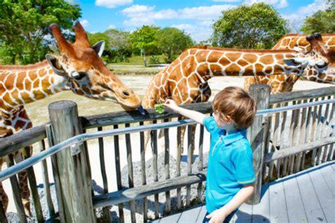 5 Fun Animal Themed Writing Prompts   Studentreasures Blog