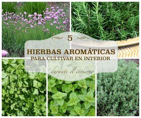 5 hierbas aromáticas para cultivar en interior   Hierbas ...