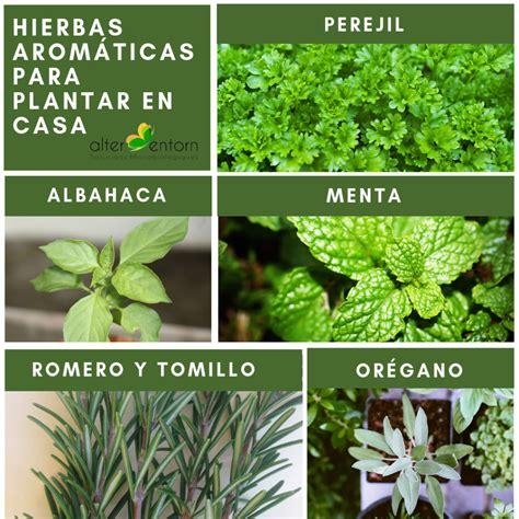 5 Hierbas aromáticas para plantar en casa: perejil ...