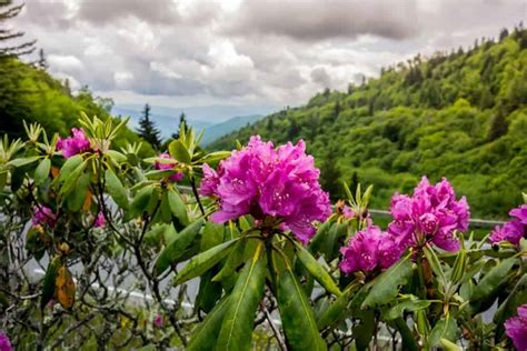 5 Interesting Facts About the Smoky Mountain Wildflowers ...