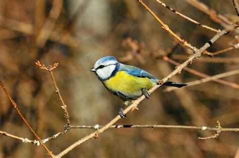 5 lugares imprescindibles para ver aves en España   Guía ...