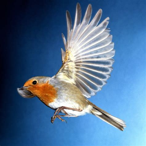 5 Major Characteristics of Birds | Animals   mom.me