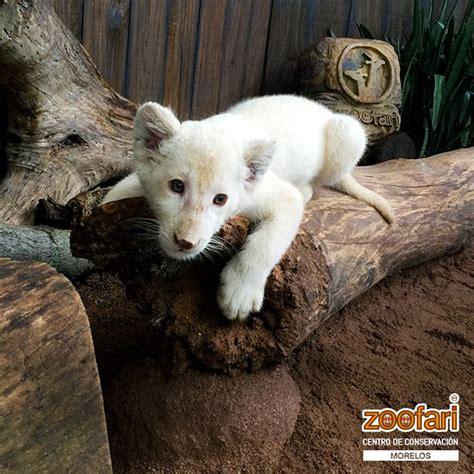 5 organizaciones importantes que protegen a los animales ...