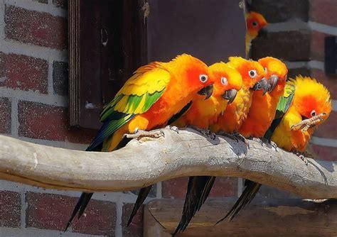 5 Pájaros Exóticos para tener en Casa ComoConseguirque.com ...