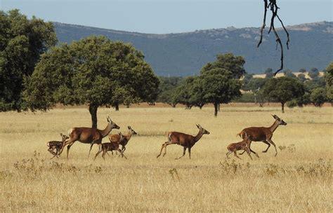 5 Parques Nacionales para una escapada rural — idealista/news