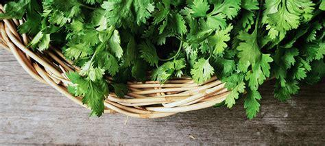5 plantas aromáticas que no deben faltar en tu cocina ...