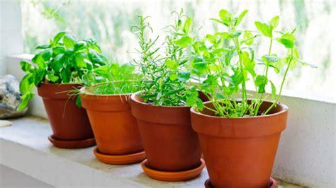 5 plantas aromáticas que puedes cultivar en casa | Cocina ...