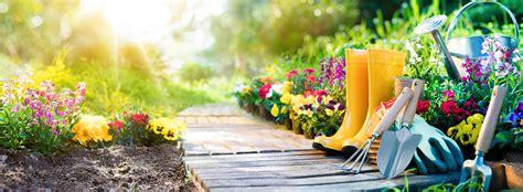 5 plantas con flores resistentes al sol, ideales para ...