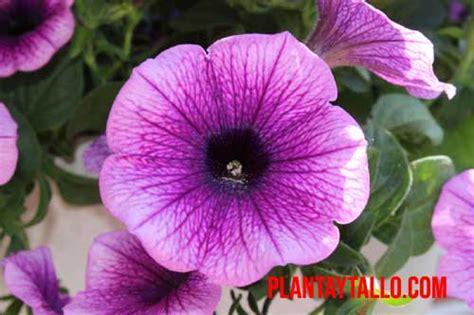 5 plantas de exterior con flor todo el año, para tener ...