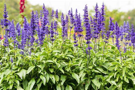 5 plantas de olor para un jardín pequeño y aromatico