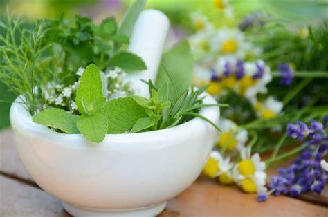 5 plantas medicinales que ayudan a la salud del cuerpo