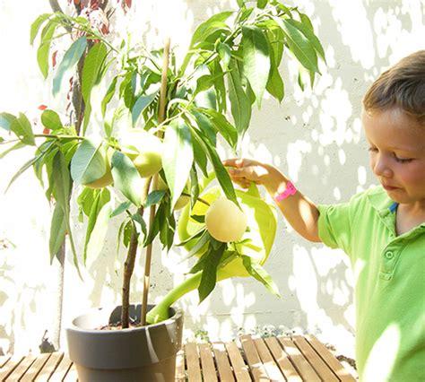 5 plantas para balcones soleados: Preciosas y resistentes
