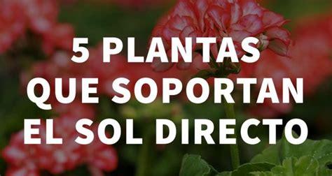 5 plantas que soportan el sol directo