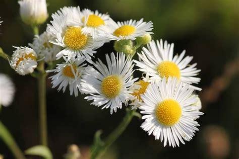 5 plantas que toleran el sol directo | Plantas para el sol ...