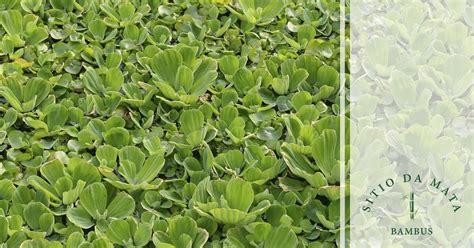 5 Tipos de Plantas Para Beira de Rio   Sítio da Mata