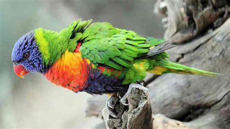 5 tips para cuidar pájaros exóticos en casa