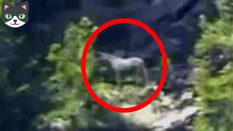 5 Unicornios Reales Captados en Cámara | Criaturas ...