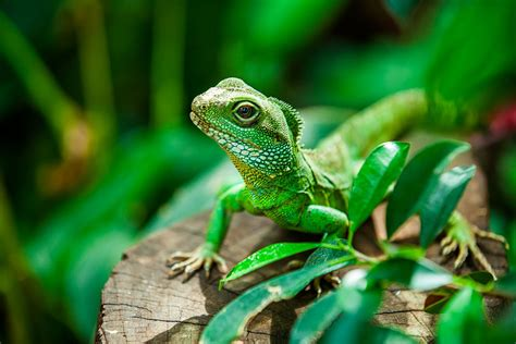 5 Ways to Distinguish Reptiles From Amphibians and Fish