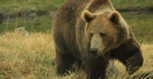 50 Ejemplos de Animales Invertebrados