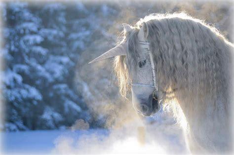 50 Las descripciones poéticas de Unicornios   Imágenes en ...