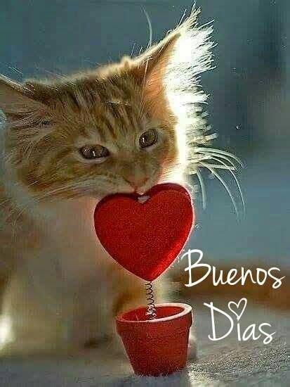 515 best images about saludos de buenos. dias. Buenas ...