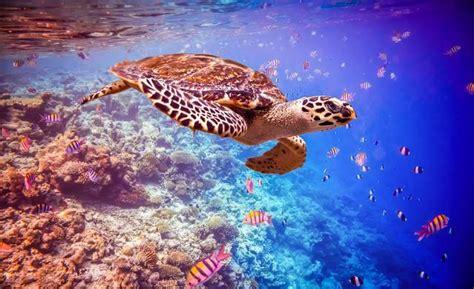 6 animales marinos en grave peligro de extinción   VIX