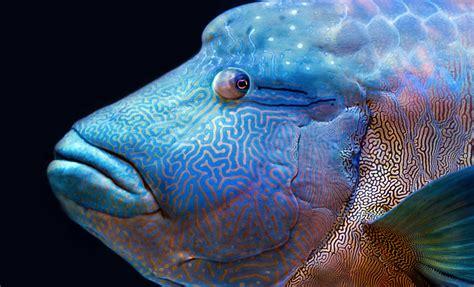 6 animales marinos en peligro de extinción   Ecólatras