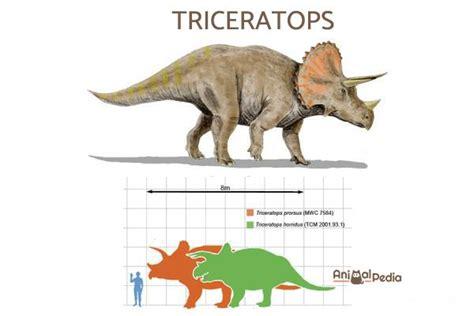 6 dinosauri erbivori: nomi, caratteristiche e curiosità ...
