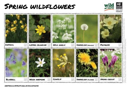 6 facts you didn t know about wildflowers   Herts and ...