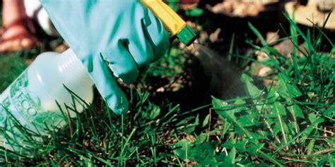 6 formas de hacer herbicida casero y natural para eliminar ...