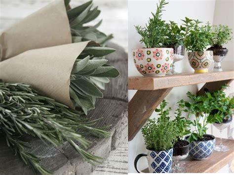 6 hierbas aromáticas que puedes crecer en tu propia casa ...