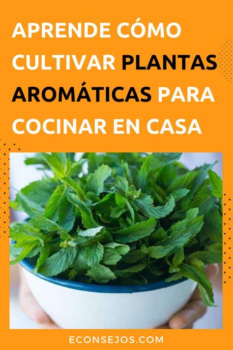 6 Plantas aromáticas para cocinar: cómo usarlas ...