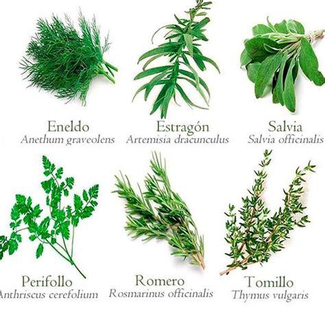 6 plantas medicinales para la salud y fáciles de conseguir ...