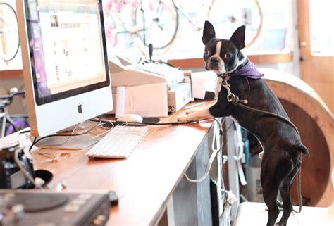 6 tiendas en línea para comprar TODO para tu mascota