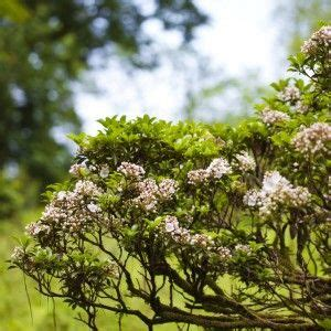 6 Wild Facts About the Smoky Mountain Wild Flowers | Wild ...