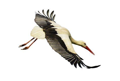 622 especies componen la nueva  Lista de las aves de España