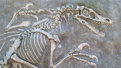 67 million year old raptor fossil found in New Mexico