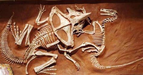 67 million years ago, a velociraptor and protoceratops are ...