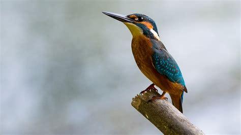 7 aves más comunes que puedes encontrar en Singapu    ...