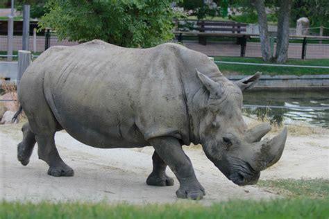 7 cosas que no te puedes perder si visitas el Zoo de Madrid