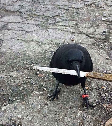 7 cuervos que vienen a demostrarnos que son los amos de ...