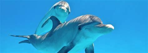 7 datos de los delfines que nunca imaginaste